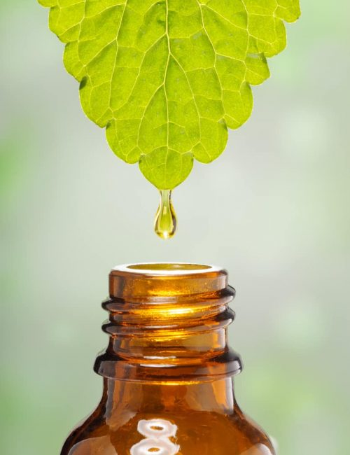 alternative medicine, droplet of oil essence is falling down from a leaf into a medical bottle